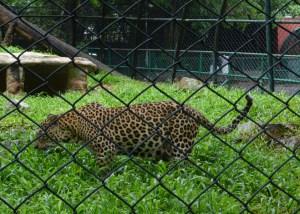 Trivandrum Zoo, Thiruvananthapuram
