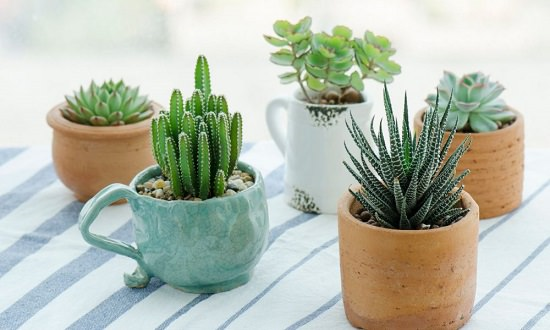 How To Buy Succulent Plants Online In India India Gardening