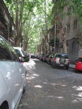 Pretty tree lined street - welcome shade!