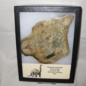 Jurassic Age Fossil Sauropod Dinosaur Coprolite (Dung) from the Morrison Formation of Utah
