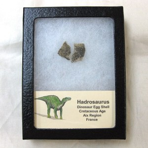Fossil Cretaceous Age Hadrosaurus Dinosaur Egg Shell from France