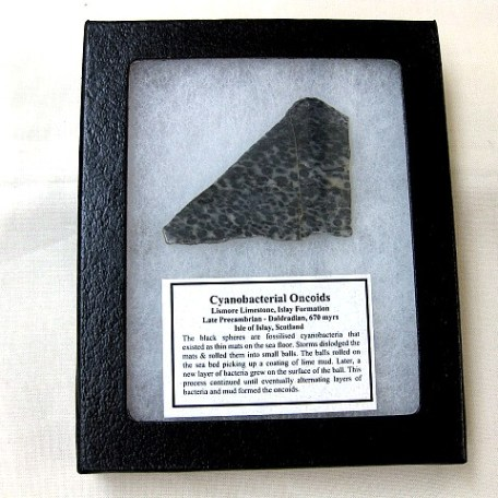 Fossil Precambrian Cyanobacterial Oncoid from Scotland