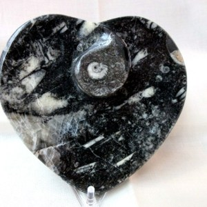 Heart Devonian Goniatite Decorative Bowl