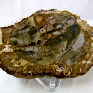 Fossil Triassic Age Polished Double Sided Petrified Wood Slice from Madagascar