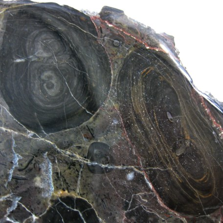 californina precambrian stromatolite 14b