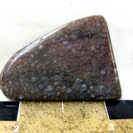 Jurassic Age Polished Dinosaur Bone Cabochon from the Morrison Formation of Utah