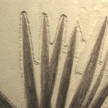 Fossil Eocene Sabalites Palm Frond from the Green River Formation of Wyoming