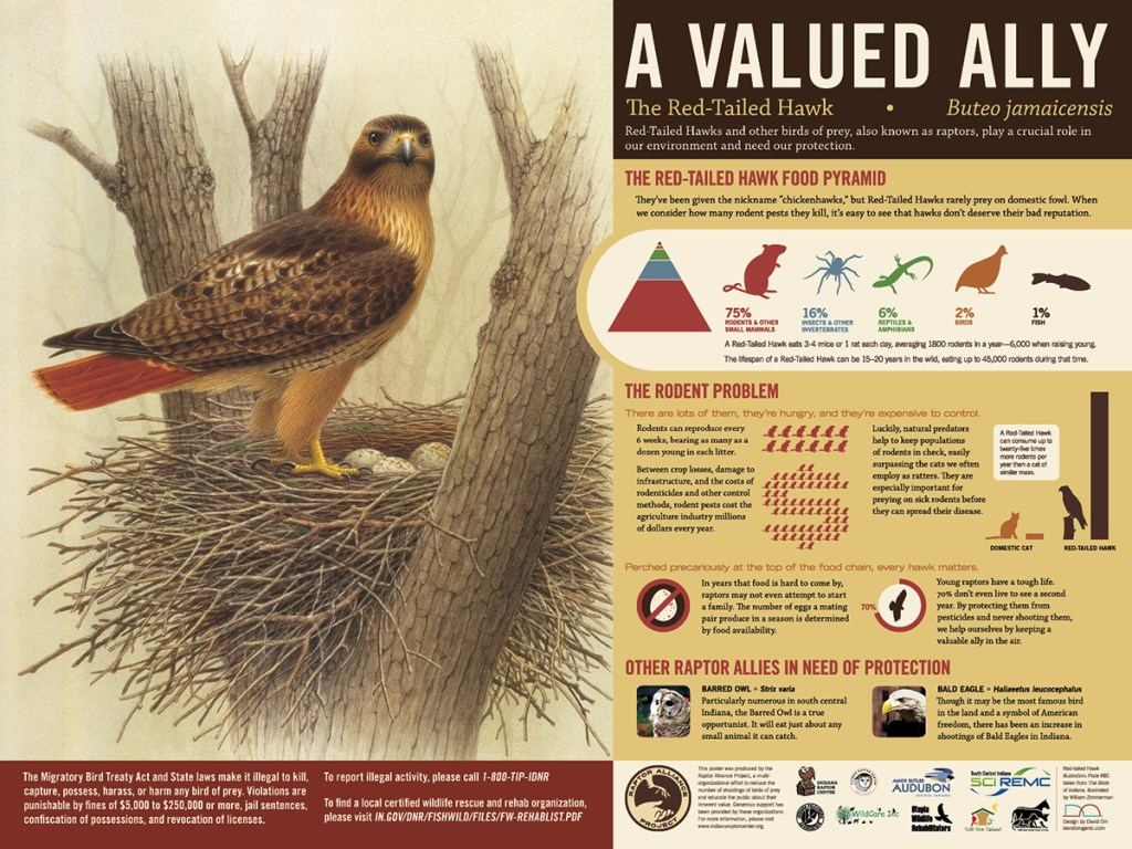 A Valued Ally, a poster from the Raptor Alliance Project