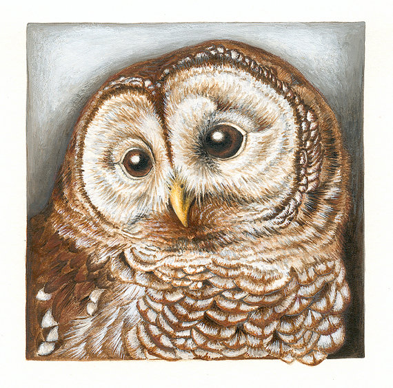'Barred Owl,' reproduction of a painting by Claudia Hahn
