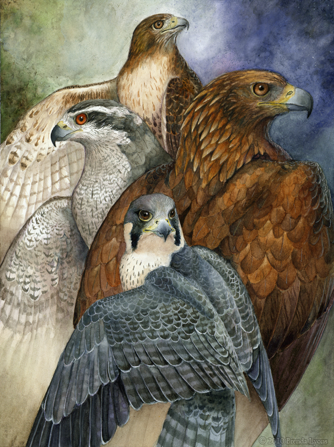 Four North American Raptors by Brenda Lyons