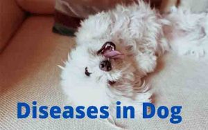 Diseases in dogs