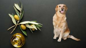 Can dogs eat olive
