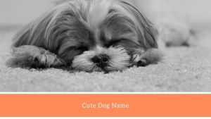 Cute Dogs Name