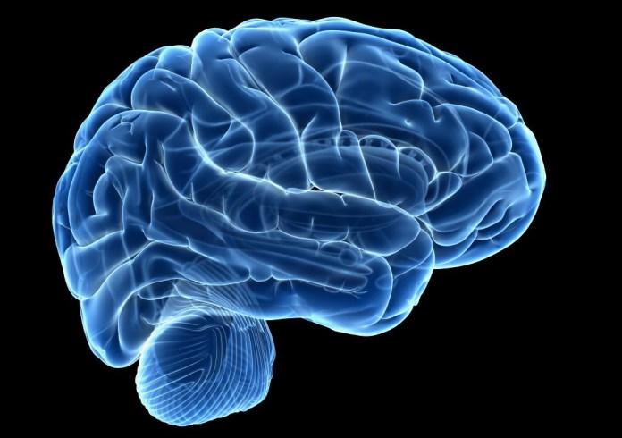Smaller brain