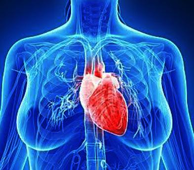 Heart women1
