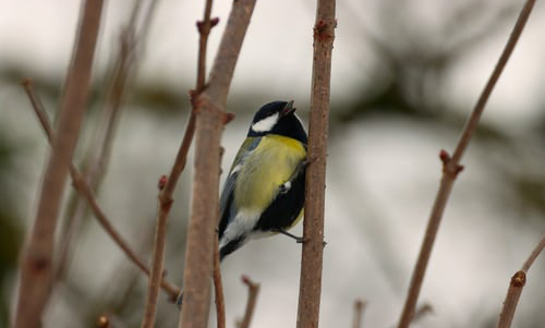 Climate Change and Egg Lying of Birds Related