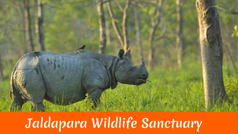 Jaldapara Wildlife Sanctuary..