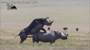 गैंडे के लंड से चूत फट गयी XXX Fucking Pic Rhinoceros Big Cock Fucking Animal Sex (3)