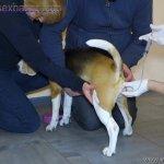 Animal Sex लड़की कुत्ते के लंड का मुठ मारते हुए वीर्य निकालते हुए Zoo sex dog sex (3)