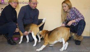Animal Sex लड़की कुत्ते के लंड का मुठ मारते हुए वीर्य निकालते हुए Zoo sex dog sex (4)