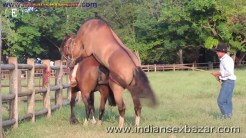 Animal Sex Girl Sex With Animals Girl sex with horse Ful HD Porn (4)