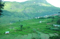 Munnar Tourist Places Pictures 14
