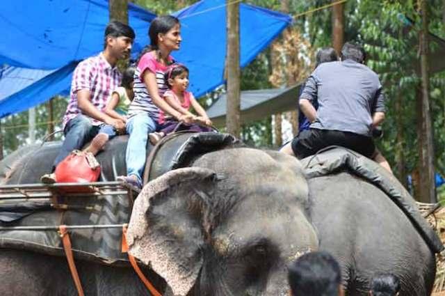 davidson_2020-tourism-elephant-c