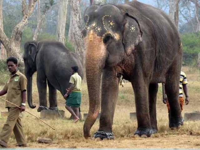 davidson_2020-tourism-elephant-d