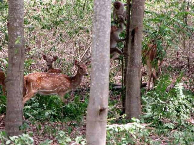 davidson_2020_y_forest_deer