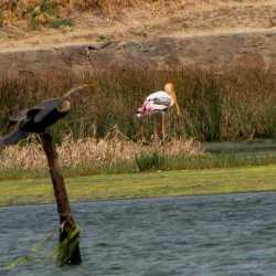 tribalfound_biodiversity_2012_birds_web