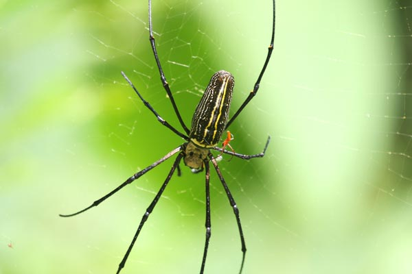 spiders_giant_tiny_gg_thattekad_2014