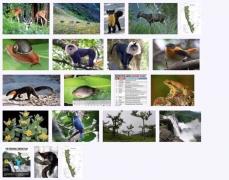 west_ghats_ecology_animals_screenshot_03
