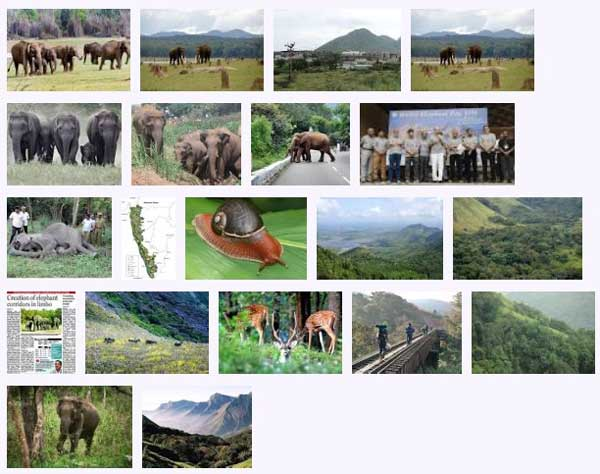 west_ghats_ecology_animals_screenshot_01