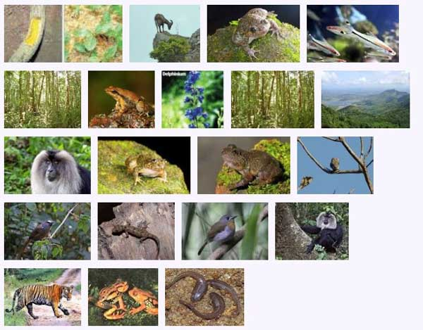 west_ghats_ecology_animals_screenshot_02