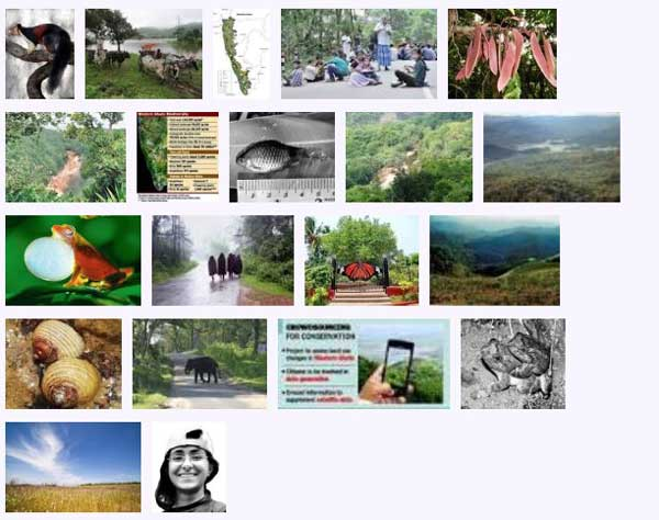west_ghats_ecology_animals_screenshot_04