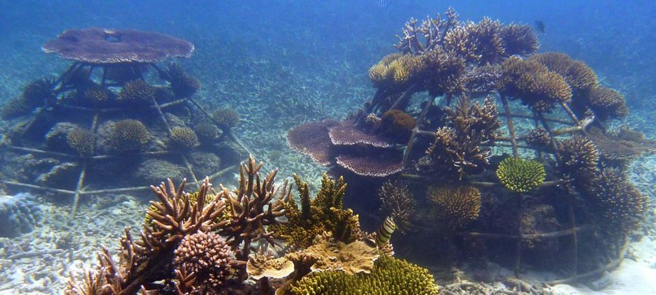 Artificial Coral Reef Structures Create Ecosystems And