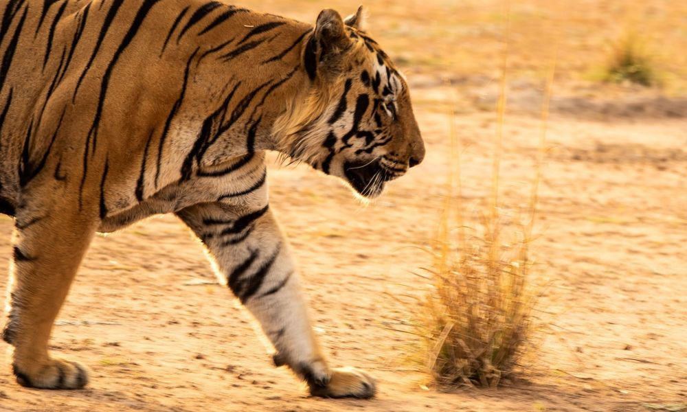 Tadoba Andhari Tiger Reserve Entry Fee & Safari Timings