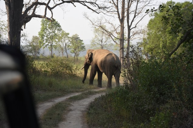 Charge Ends, Tusker Retreats; Photo by Pooja Parvati