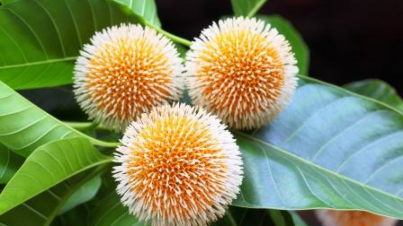 Plant extract, heat can kill cancer cells, reveals study - Indica News
