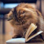 Looks like a good book