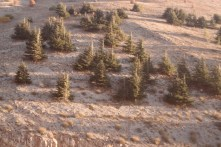 Cedar Conservation somewhere in Lebanon (Not the Arz area)