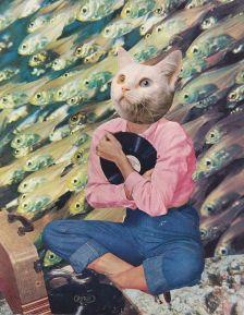 cat record