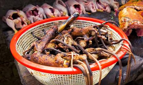 Pilihan kuliner ekstrem di Indonesia (Foto via Youtube Best Ever Food Review Show )