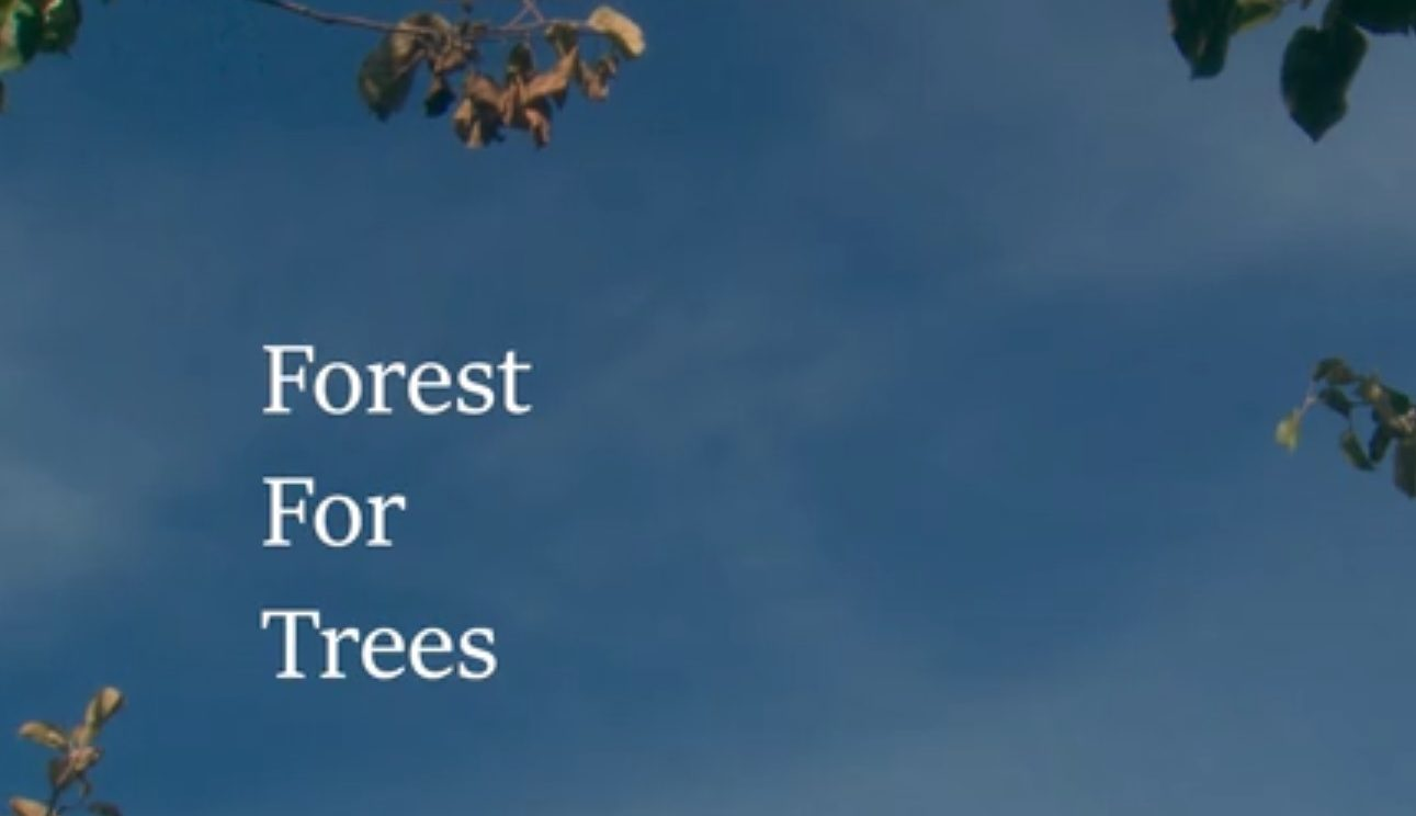 Forest for Trees