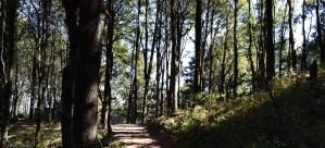 Binsara Forest