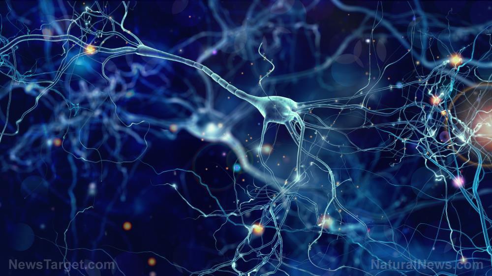Nieuwe studie werpt licht op hoe de ziekte van Alzheimer de hersenen beschadigt