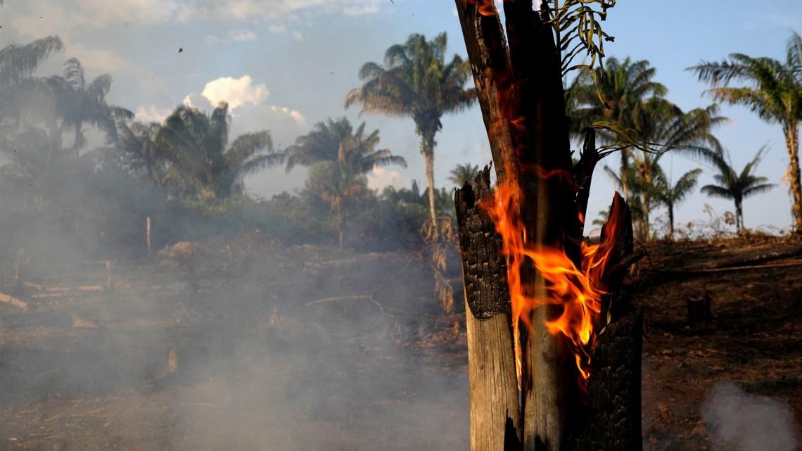 De Amazone-regenwouden staan in brand. De Braziliaanse Trump-achtige president, Jair Bolsonaro, is de schuldige
