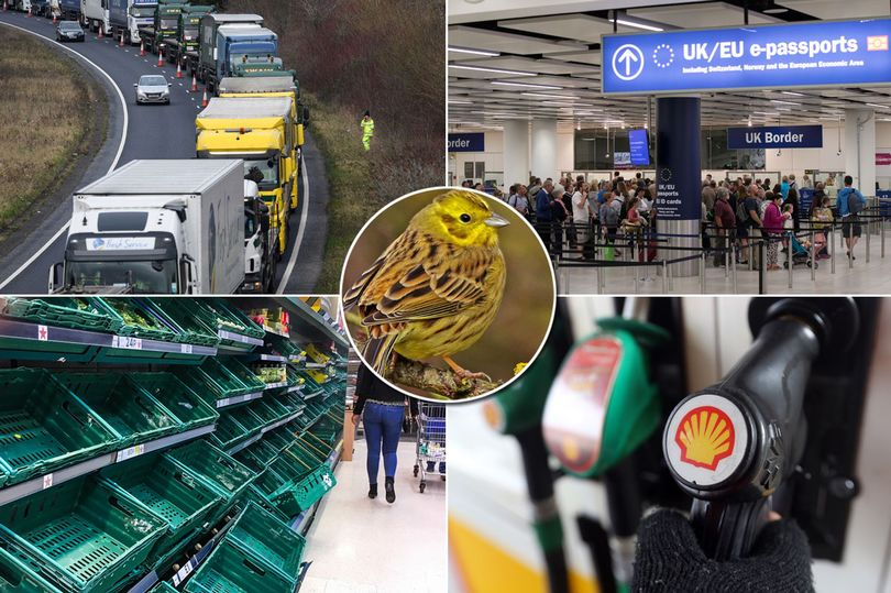 Operatie Yellowhammer: 'No-deal' Brexit-plannen lekken
