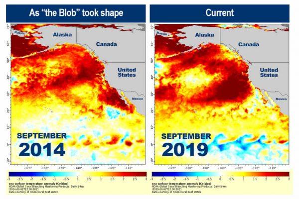 """De temperaturen in de Stille Oceaan zijn gestegen tot gevaarlijke niveaus, en wetenschappers beschuldigen een """"vreemde anomalie"""""""
