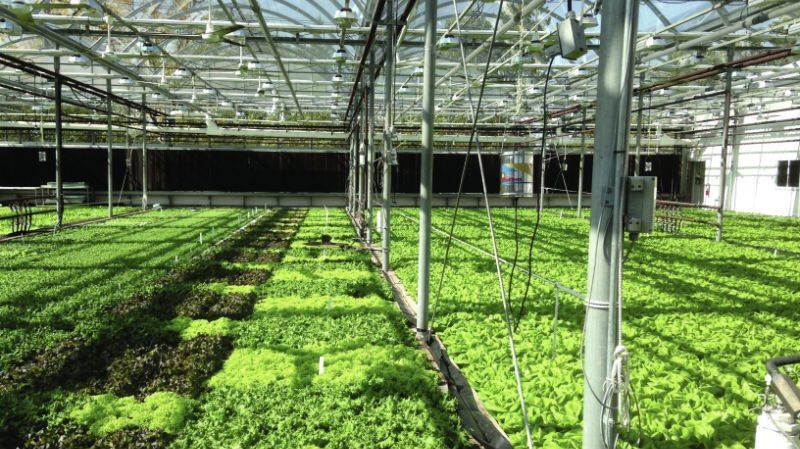 Als koolstofdioxide zo slecht is, waarom kopen kassenbouwers koolstofdioxide-generatoren om de vegetatie te verdubbelen?